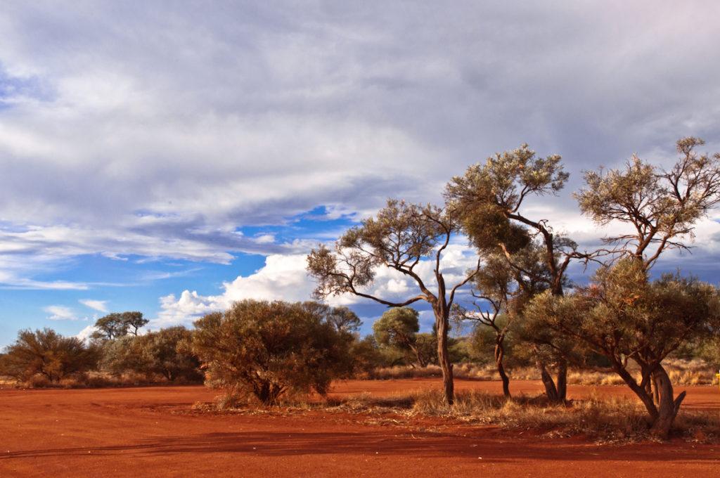 Route Stuart Highway déserte avec arbres et nuages