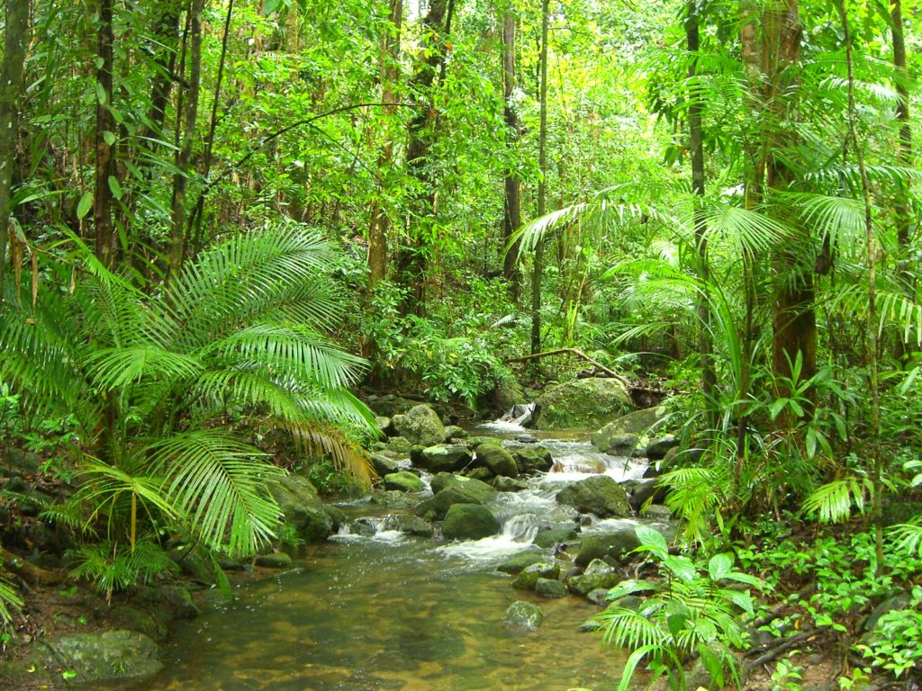 forêt tropicale de Daintree en Australie