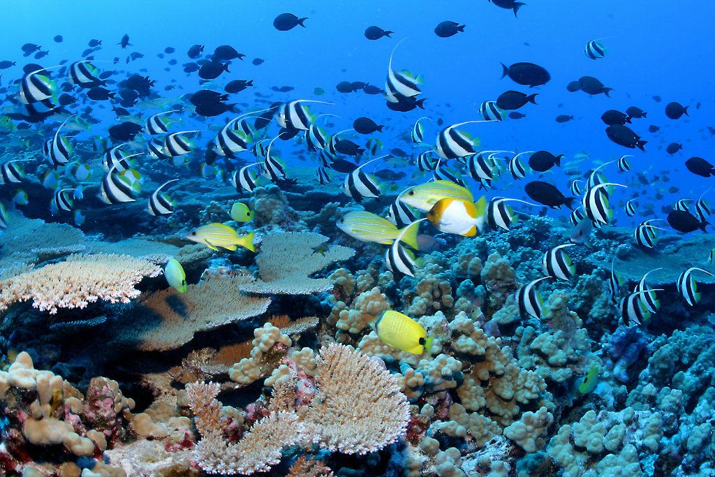 Grande barrière de corail en Australie