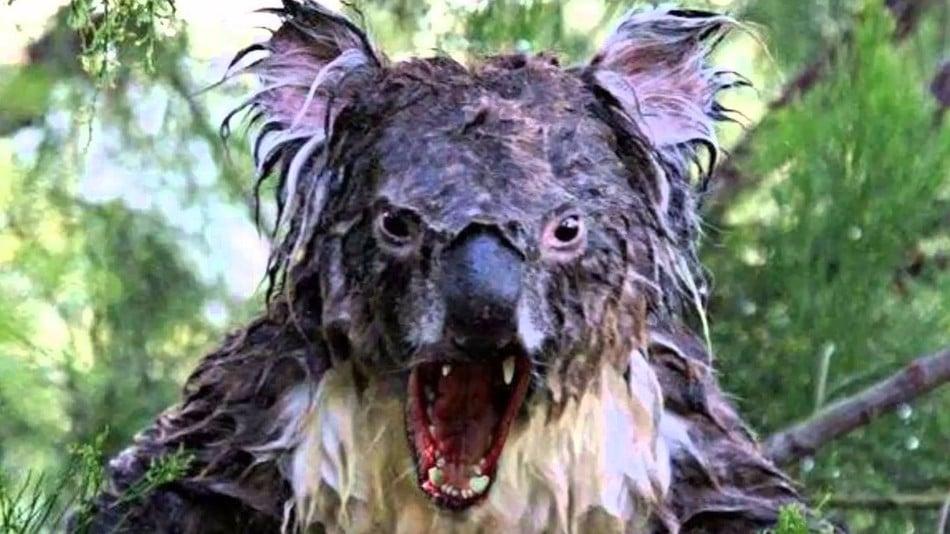Koalas, et monstres légendaires australiens