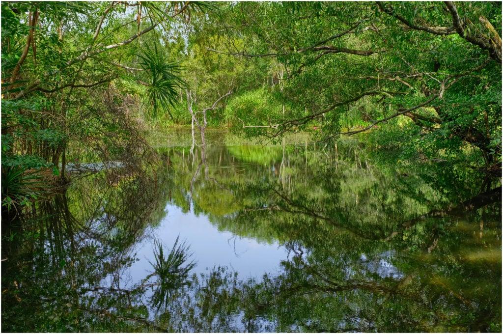 Jungle et flore dans le Territory Wildlife Park